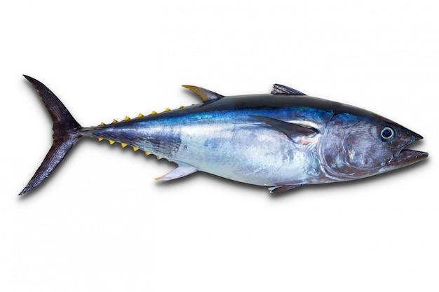Czysty tuńczyk naprawdę świeży na białym Premium Zdjęcia