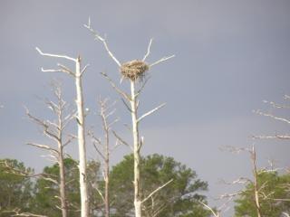 De - Eagles Nest, Drzewo Darmowe Zdjęcia