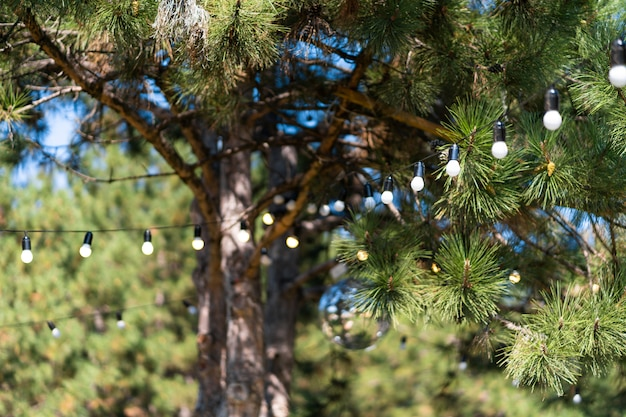 Dekoracja Na Imprezę Na świeżym Powietrzu. Girlanda żarówek Zwisających Między Drzewami. Premium Zdjęcia