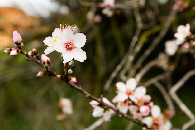 Dekoracja Pięknego Drzewa Z Kwiatami Darmowe Zdjęcia
