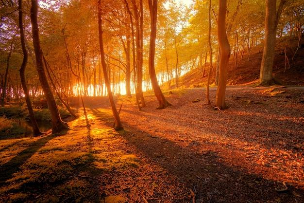 Dekoracje Jesieni. Darmowe Zdjęcia
