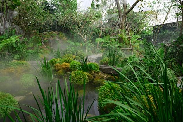 Dekoracje Ogrodowe Z Tysiącami Lokalnych Paproci I Mchu Premium Zdjęcia