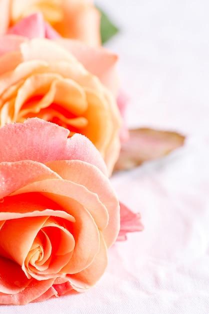 Dekoracyjny świąteczny Tło Z Makro- Widoku świeży Naturalny Kwiat Róży Z Kroplami Wody Na Płatkach. Premium Zdjęcia