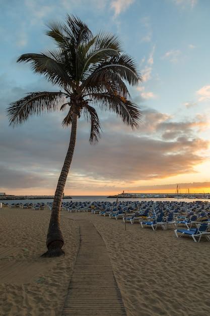 Deska Spacer Między Drzewkiem Palmowym I Sunbeds Przy Puerto Rico Plażą W Gran Canaria, Hiszpania. Premium Zdjęcia