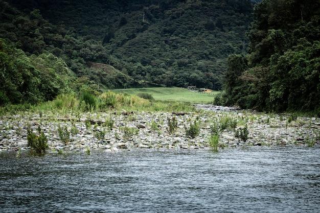 Długie ujęcie krajobrazu lasu i wody Darmowe Zdjęcia