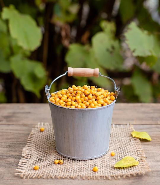 Dojrzałe jagody rokitnika w wiadrze. zdrowe jesienne jagody witaminy Premium Zdjęcia