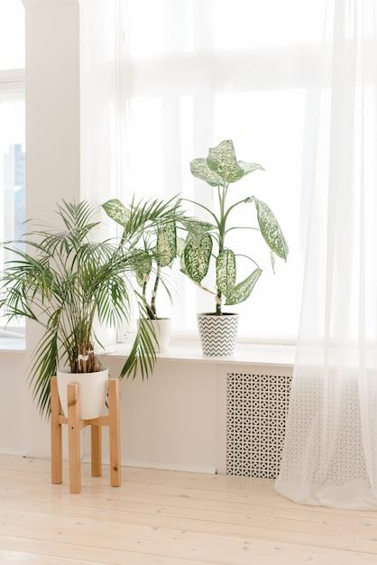 Domowe Rośliny Domowe Na Lekkim Parapecie. Nowoczesne Rośliny W Doniczkach W Jasnym Wnętrzu. Palmy W Domu Premium Zdjęcia