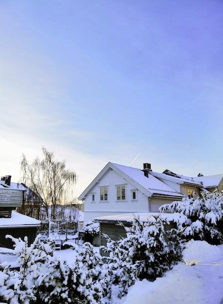 Domy Otoczone Drzewami Pokrytymi śniegiem W Larvik W Norwegii Darmowe Zdjęcia
