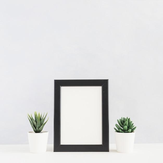 Doniczkowa kaktusowa roślina między obrazek ramą na biurku przeciw białemu tłu Darmowe Zdjęcia