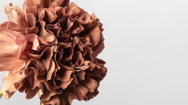 Dość Kwitło Kwiat Z Bliska Darmowe Zdjęcia