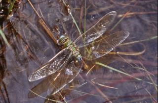 Dragonfly, Rośliny Darmowe Zdjęcia