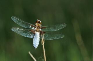 Dragonfly, Zielony Darmowe Zdjęcia