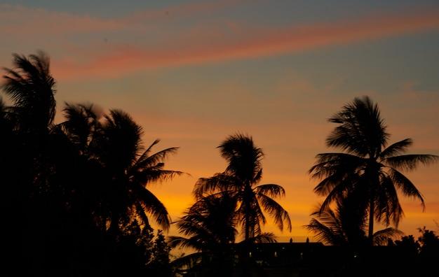 Dramatyczny Niebo W Błękicie I Pomarańcze Na Sylwetek Kokosowych Drzewkach Palmowych I Miasto Głąbika Tle Z Kopii Przestrzenią Premium Zdjęcia