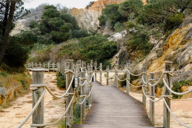 Drewniany Most W Lesie Premium Zdjęcia