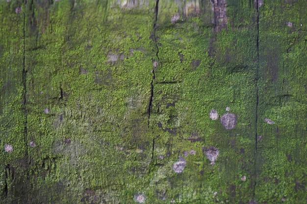 Drewno Z Mchu Darmowe Zdjęcia