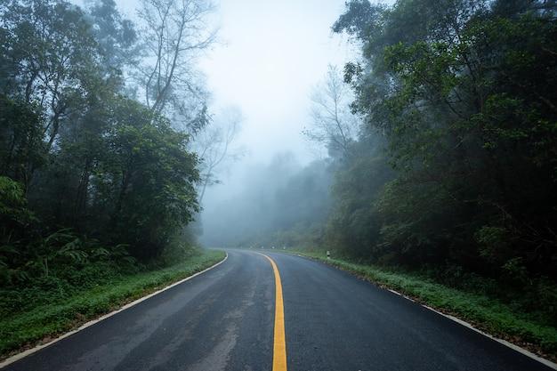 Droga z natura lasową i mgłową drogą las tropikalny. Premium Zdjęcia
