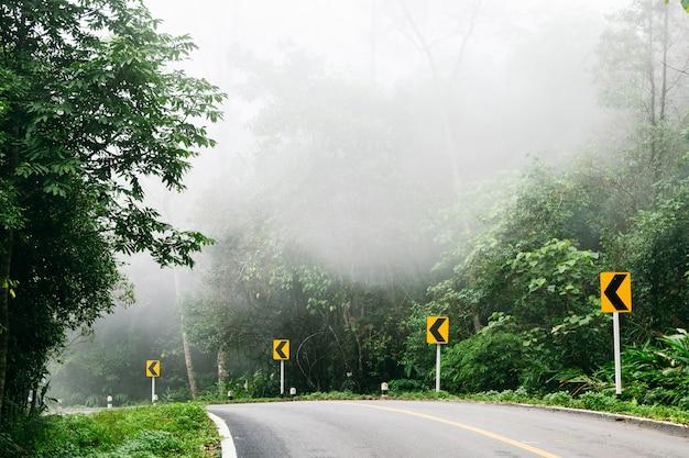 Droga z natury las i mglisty drogi lasów tropikalnych. Premium Zdjęcia
