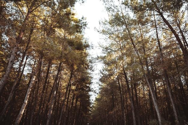 Drzewa I Niebo W Lesie Premium Zdjęcia