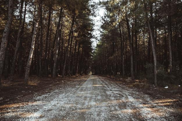 Drzewa I Polna Droga W Lesie Premium Zdjęcia