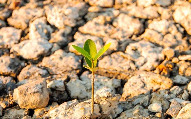 Drzewa, Które Naturalnie Rosną Na Suchych Glebach, Z Powodu Zmieniającego Się Efektu Przyrody Premium Zdjęcia