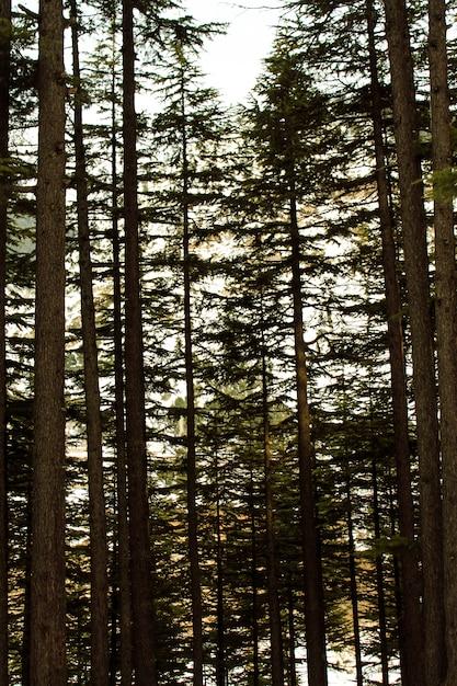 Drzewa Lasu Usho W Krajobrazie Kalam Swat Premium Zdjęcia