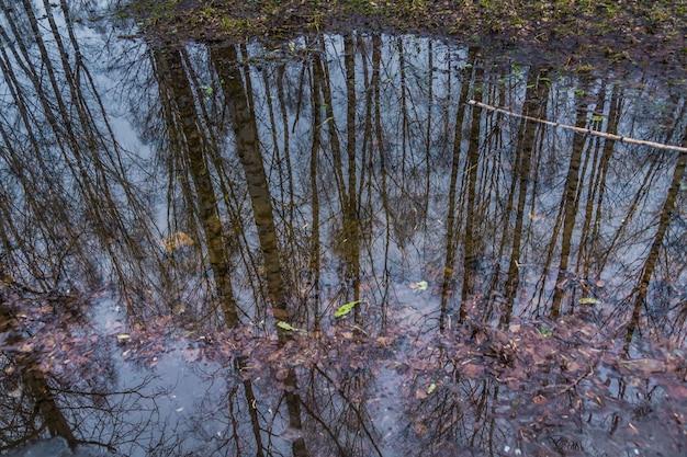 Drzewa odzwierciedlenie w kałuży Premium Zdjęcia