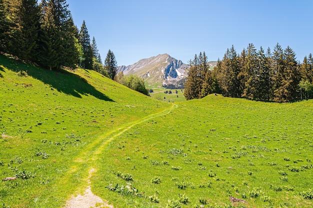 Drzewa W Górach Alp Swizz W Szwajcarii Darmowe Zdjęcia