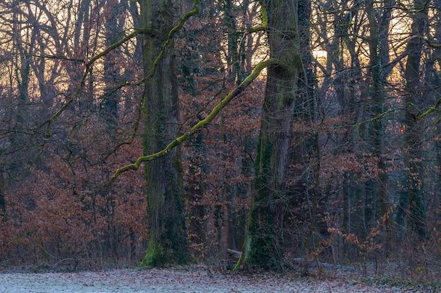 Drzewa W Lesie, Porośniętym Zielonym Mchem W Parku Maksimir W Zagrzebiu W Chorwacji Darmowe Zdjęcia