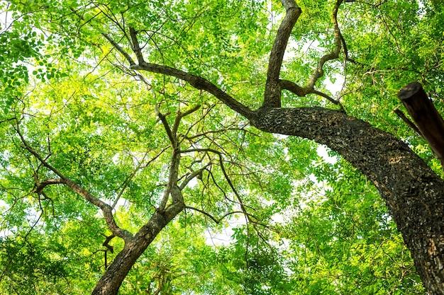 Drzewa w lesie z zielonych liści Darmowe Zdjęcia