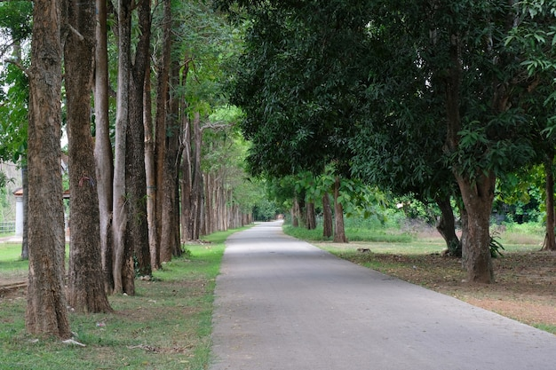 Drzewna linia wiejska droga w ranku Premium Zdjęcia