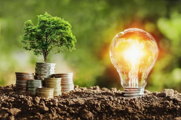 Drzewny dorośnięcie na monetach i żarówce. koncepcja oszczędzania pieniędzy z energią Premium Zdjęcia