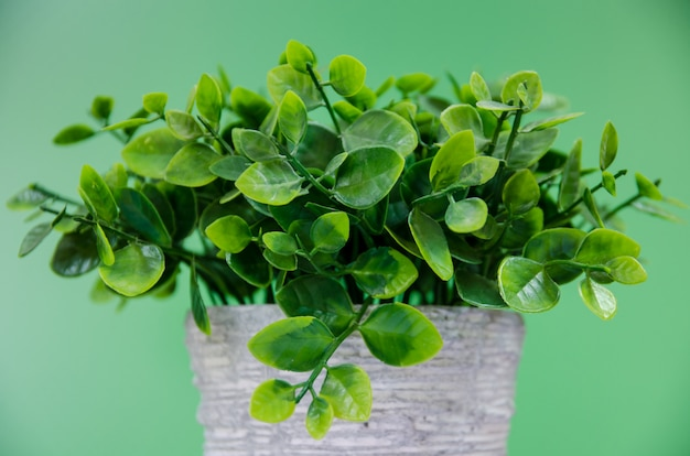 Drzewny Garnek Z Zielonym Tłem Premium Zdjęcia