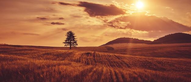 Drzewo Jest W Polu. Zachód Słońca Premium Zdjęcia