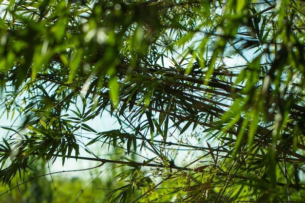 Drzewo Liście Dla Natury I Oszczędzają Zieleń Premium Zdjęcia