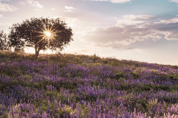 Drzewo Na Wzgórzu Kwitnących łubinów Premium Zdjęcia