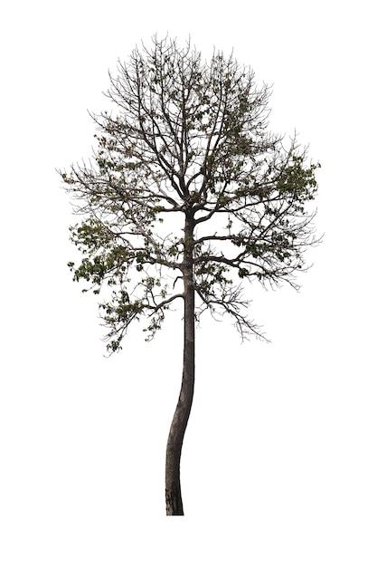 Drzewo Odizolowywający Na Białym Tle. ścieżka Przycinająca. Premium Zdjęcia