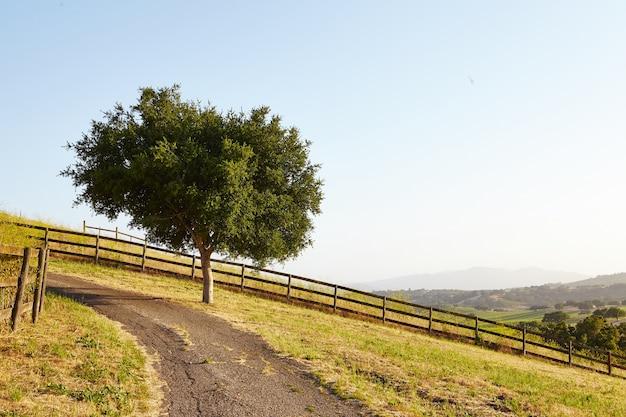Drzewo Przy Dirt Road Darmowe Zdjęcia