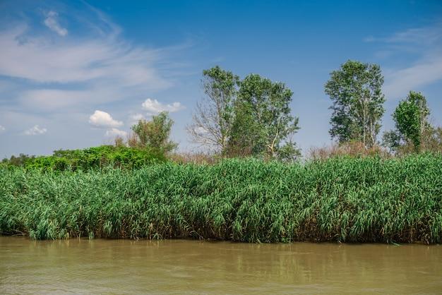 Dunaj W Pobliżu Miejscowości Vilkovo, Ukraina Premium Zdjęcia