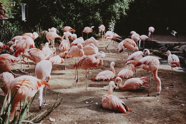 Duże Stado Pięknych Różowych Flamingów W Egzotycznym Tropikalnym Polu Darmowe Zdjęcia