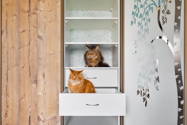 Dwa Koty Eksplorujące Półki W Szafie Premium Zdjęcia
