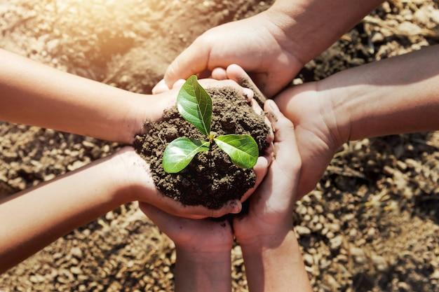 Dwa Ręka Pomaga Zasadzać Młodego Drzewa Dla Save światu Premium Zdjęcia
