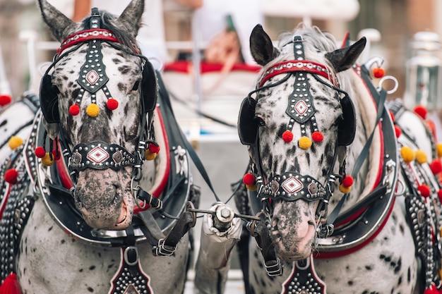 Dwa Zdobione Konie Do Jeżdżenia Turystami W Powozie Premium Zdjęcia