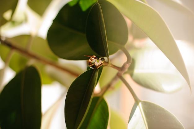 Dwa Złote Pierścienie ślubne Wiszące Na Zielonej Gałęzi Drzewa Premium Zdjęcia