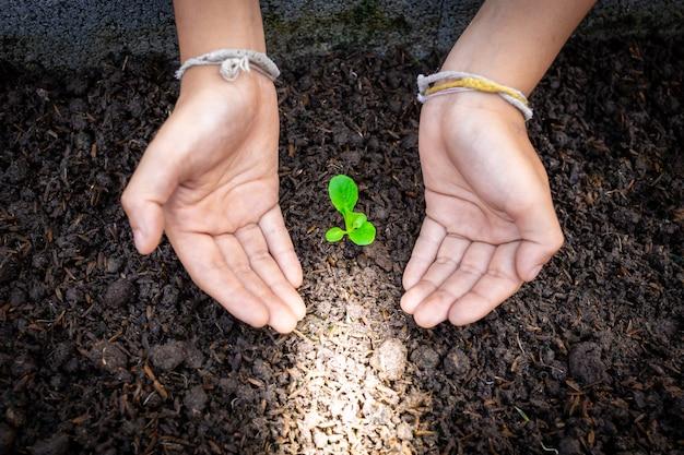 Dwie Ręce Zajmują Się Zieloną Sadzonką Premium Zdjęcia