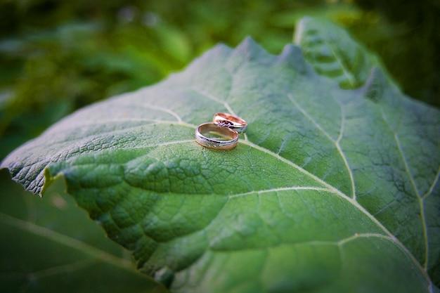 Dwie złote obrączki leżą na liściach roślin. Premium Zdjęcia