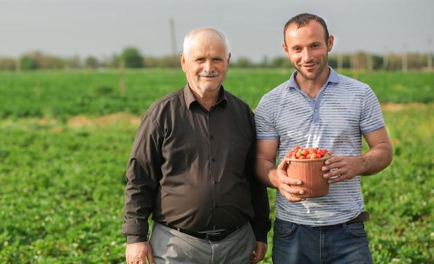 Dwóch Rolników Zebrało Kosz Zbiorów, Truskawki Ze Swojej Plantacji Darmowe Zdjęcia