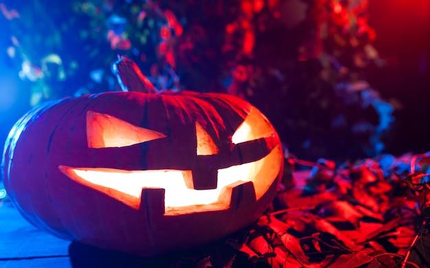 Dynia halloween w mystic forest w nocy. Premium Zdjęcia