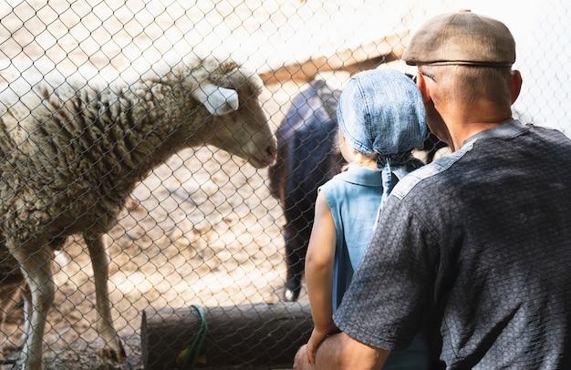 Dziadek z wnukiem, patrząc na zwierzęta Darmowe Zdjęcia