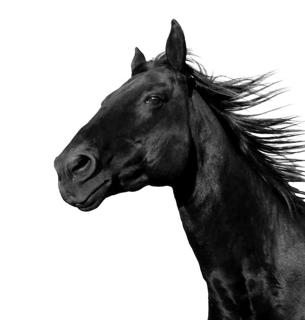 Działający Koń Na Bielu Odizolowywającym Premium Zdjęcia