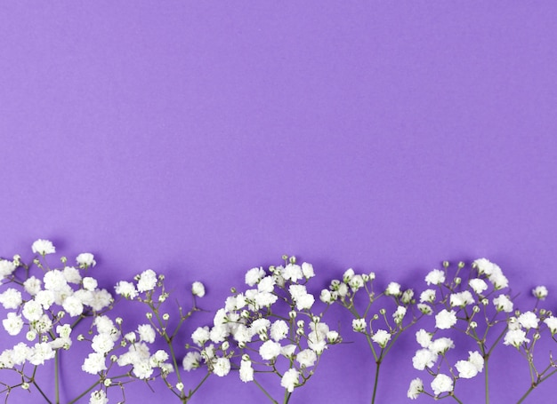 Dziecko oddech kwiat na dole fioletowym tle Darmowe Zdjęcia